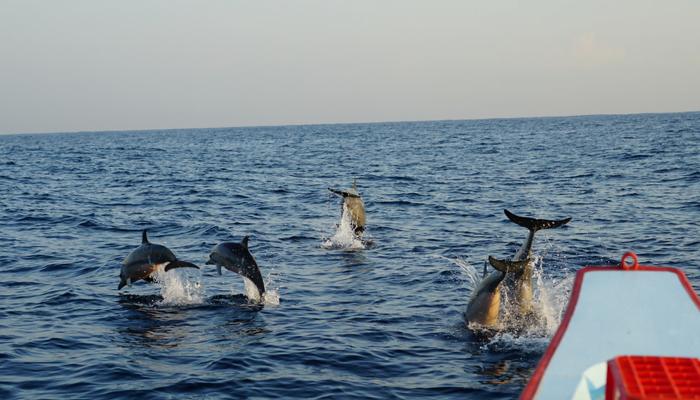 Lovina Dolphin Watch