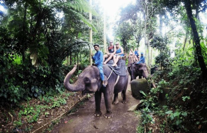 Elephant Park Ride Bali