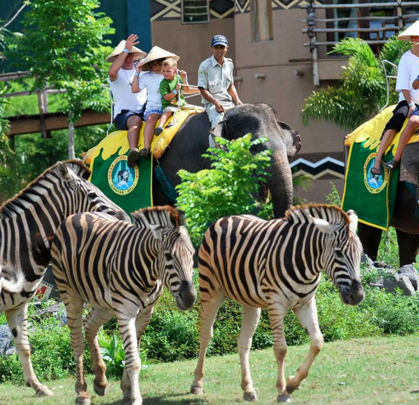 Bali safari and marine park elephant ride