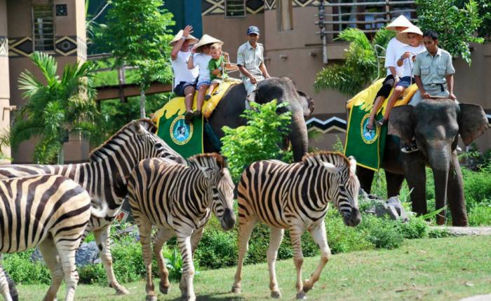 Bali safari and marine park elephant ride